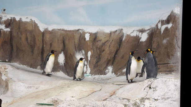 Penguins ^^